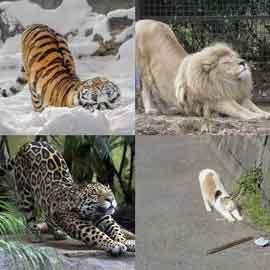趣图 6——谁还不是只小猫咪了